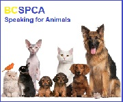 SPCA  Outdoor Fun and Time Spent With Animals